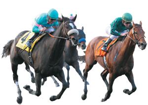 Скачки на лошадях правила