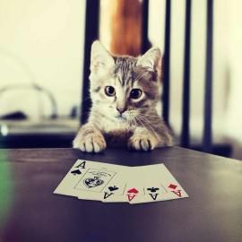 Покерстарс обман не практикует